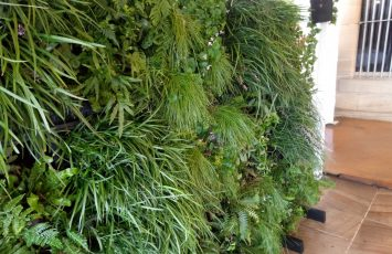 Our Superior Green Wall provides the perfect lush green backdrop for any occasion